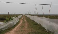 Nguồn lợi nước lợ và hệ lụy khai thác  (Kỳ 2): 'Cuộc chiến' giành mặt nước