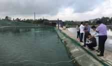 Tổng sản lượng nuôi trồng thủy sản đạt 43.210,5 tấn