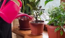 Cách chăm cây trong nhà