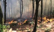 Quận Đồ Sơn: 3 vụ cháy liên tiếp thiêu rụi khoảng 9000 m2 thảm thực vật