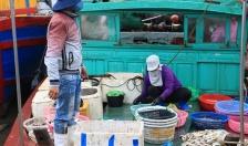 Quận Đồ Sơn:  Giá trị sứa xuất khẩu đạt 25,6 tỷ đồng