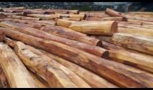 Quy định quản lý gỗ nhập khẩu, xuất khẩu