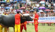 Tạm dừng Lễ hội chọi trâu truyền thống Đồ Sơn: An toàn sức khỏe, tính mạng người dân trong mùa dịch là trên hết