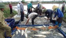 Tổng sản lượng nuôi trồng và khai thác thủy sản ước đạt 180.723,3 tấn