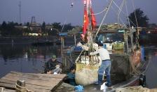 Sản lượng khai thác thủy sản đạt 51,3%