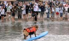 Lễ hội chó lướt sóng