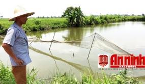Tích cực điều tra hai vụ hủy hoại tài sản tại Tiên Lãng
