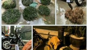 Công an quận Lê Chân:  Bắt nhóm đối tượng chuyên trộm cắp cây cảnh